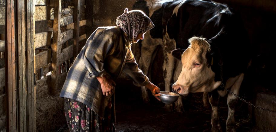 Kırsalın Karesi Akşam Vakti Gündem Doğru Haberin Adresi